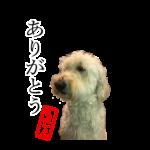 愛犬の写真をオリジナルLINEスタンプに スタクラ
