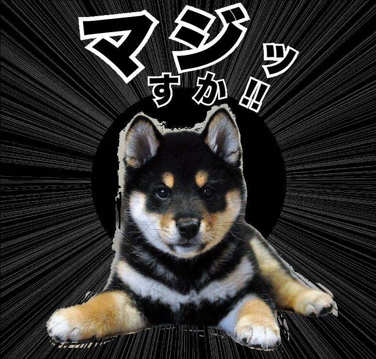 愛犬オリジナルLINEスタンプ制作