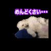 わんちゃんスタンプ制作例マル君とモジェ君(愛犬LINEスタンプ)