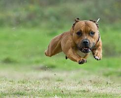 愛犬のオリジナルlineスタンプをスマホの写真から作れます。