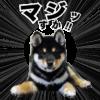 わんちゃんスタンプ制作例コタロウ君(愛犬LINEスタンプ)