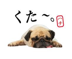 愛犬LINEスタンプ制作例