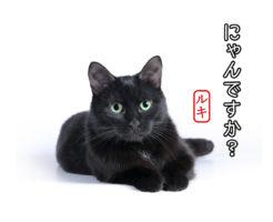 愛猫LINEスタンプ【satchel(スタクラ)】